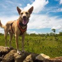 2017_Dogs_Molinos (93 of 94)-9web