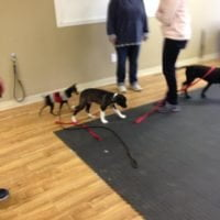 elvis puppy school